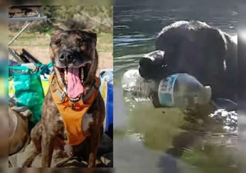 Chipper, el perro que recicla