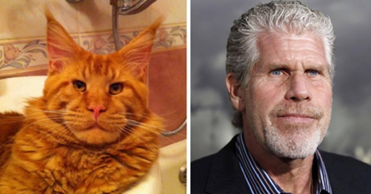 21+ divertidas fotos de animales que son idénticos a los famosos