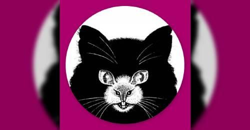 Test de personalidad sexual: ¿ves un gato o una rata?