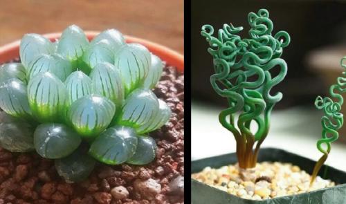 12 bellísimas y extrañas plantas de interior que seguro no conocías y querr..