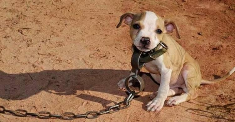 México castigará con cárcel a espectadores y organizadores de peleas de perros