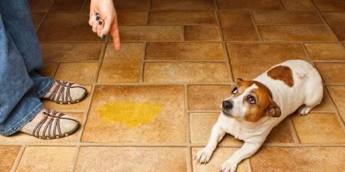 """Así puedes enseñar a tu perrito a no hacer """"pipí"""" dentro - no hagas lo sigu.."""