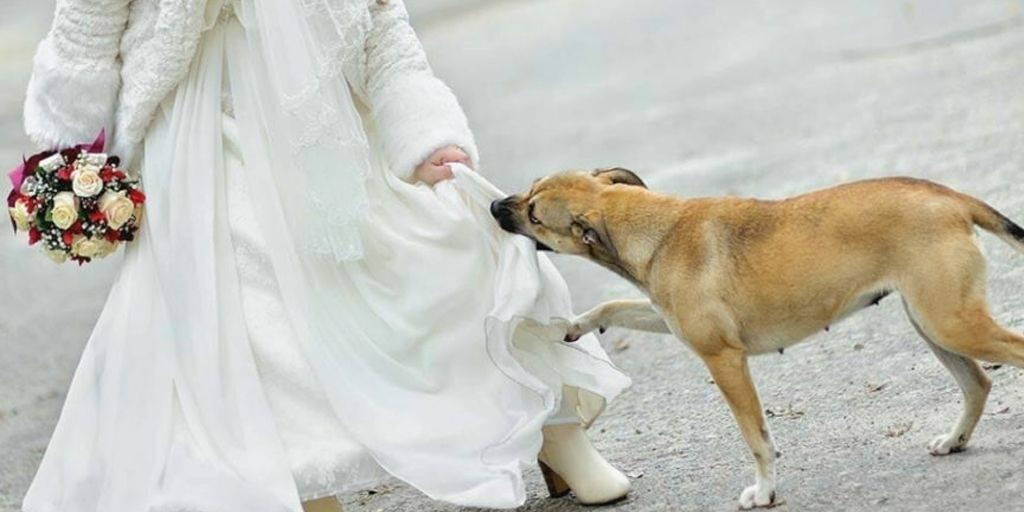 Este perro evitó una tragedia el día de su boda