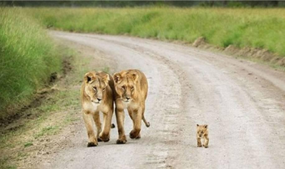 16+ fotos de animales con sus pequeños hijos que te van a derretir el corazón