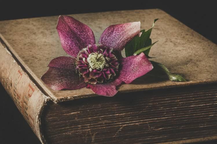 Libro antiguo con una flor encima