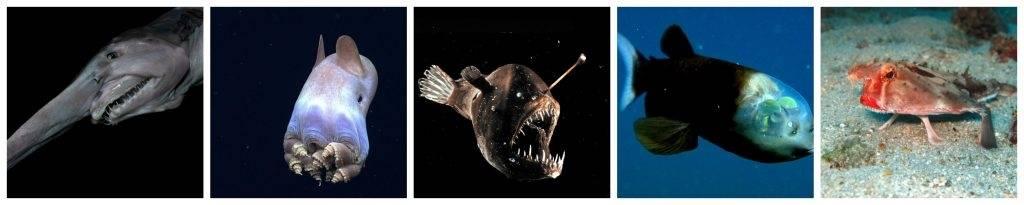 Las 5 especies marinas más raras hasta ahora descubiertas.