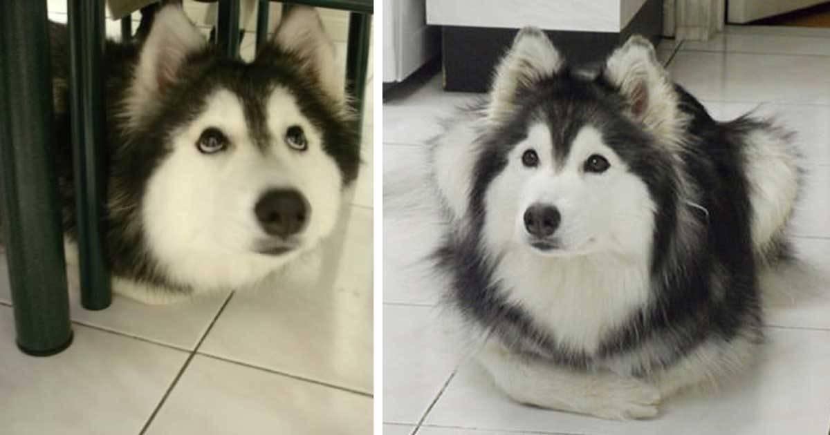 Esta perra fue criada entre muchos gatos, y ahora piensa que es un gato