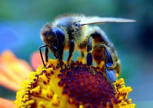 Las abejas comparten una habilidad con los humanos, ¡descubre cuál es!