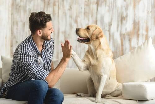 Estudio demuestra que perder a tu perro es igual de difícil que perder a un ser