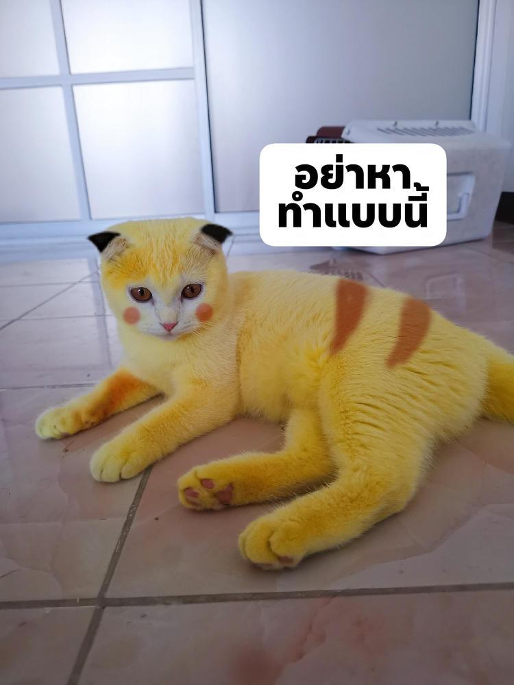pika-cat-1