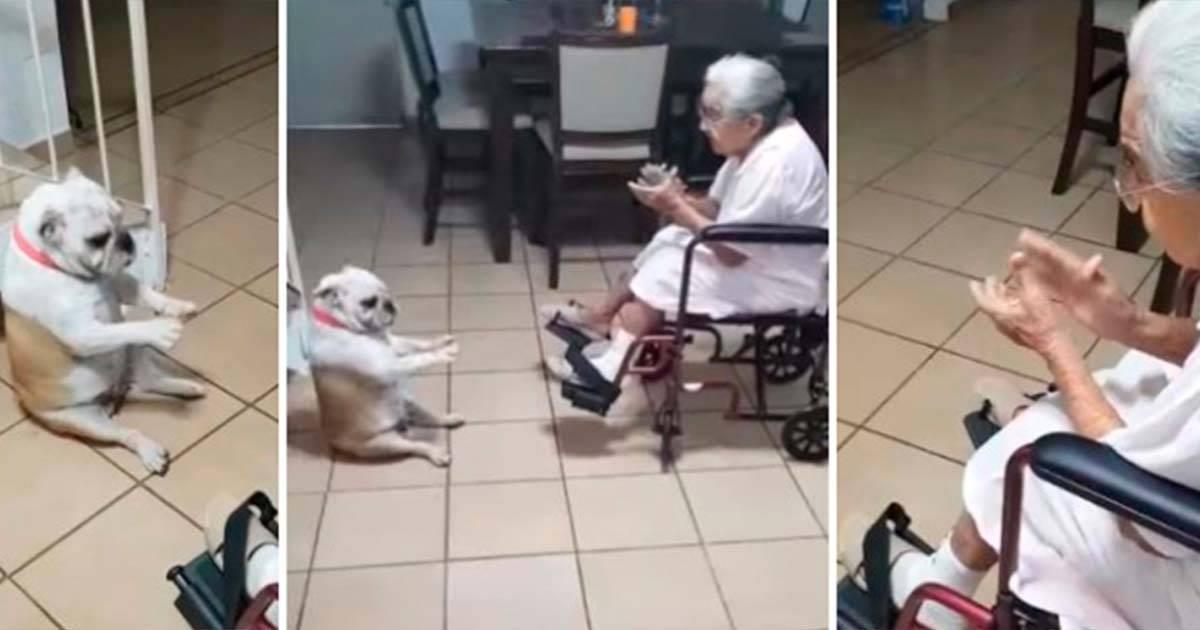 La abuela canta y el bulldog baila, ¡qué gran equipo hacen este par!