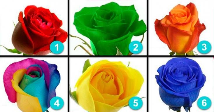 Extraña relación existe entre una rosa y tu personalidad.