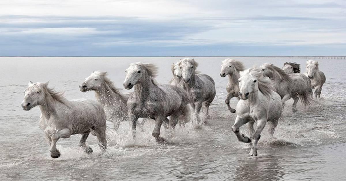 Increíble sensación de libertad y fuerza, causan los caballos galopando en e..