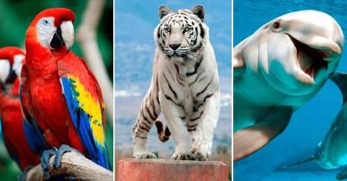 Estos son los animales más hermosos que existen en el planeta