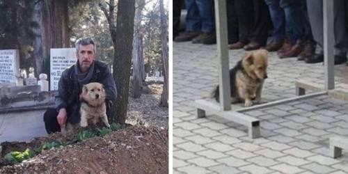 Este perro huye hacia una tumba y su dueño llora al saber su destino