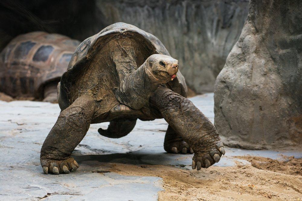 tortugas gigantes divorcio