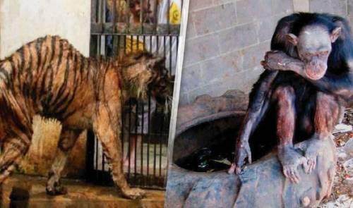 El lugar más tenebroso que puedas conocer es el zoológico de la muerte