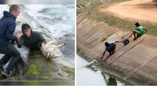 Estas personas arriesgaron su vida para salvar a pequeños animales