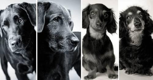 Proyecto fotográfico: ¿cómo envejecen los perros?