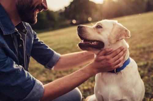 La muerte de una mascota duele tanto como despedir a un ser querido