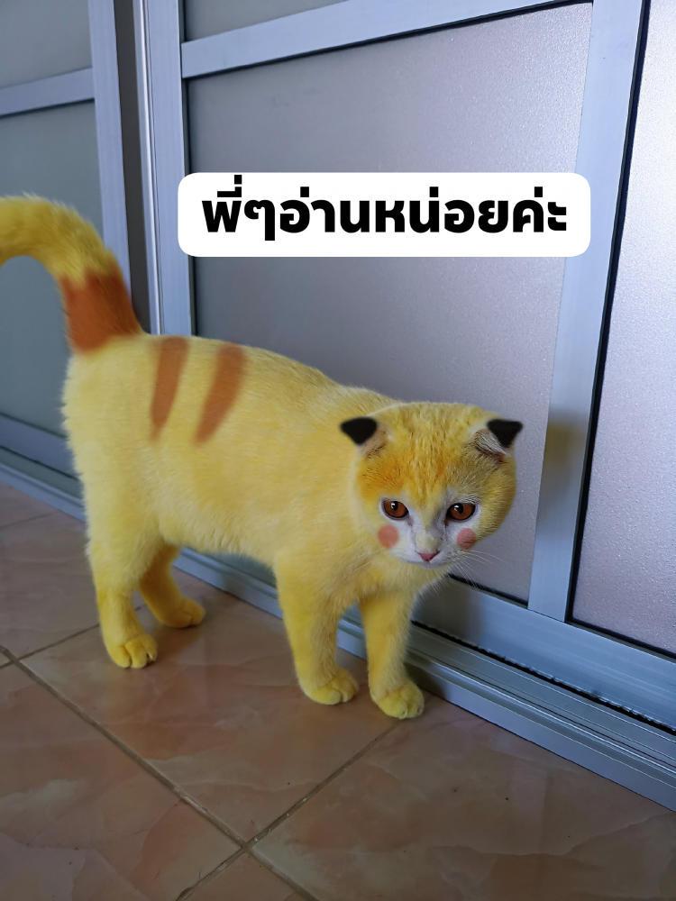 pika-cat