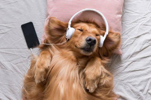¿Es cierto que escuchar música por la noche nos ayuda a dormir?