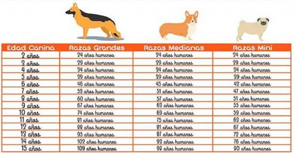 Edad perruna: ¿cómo saber la verdadera de tu perro?