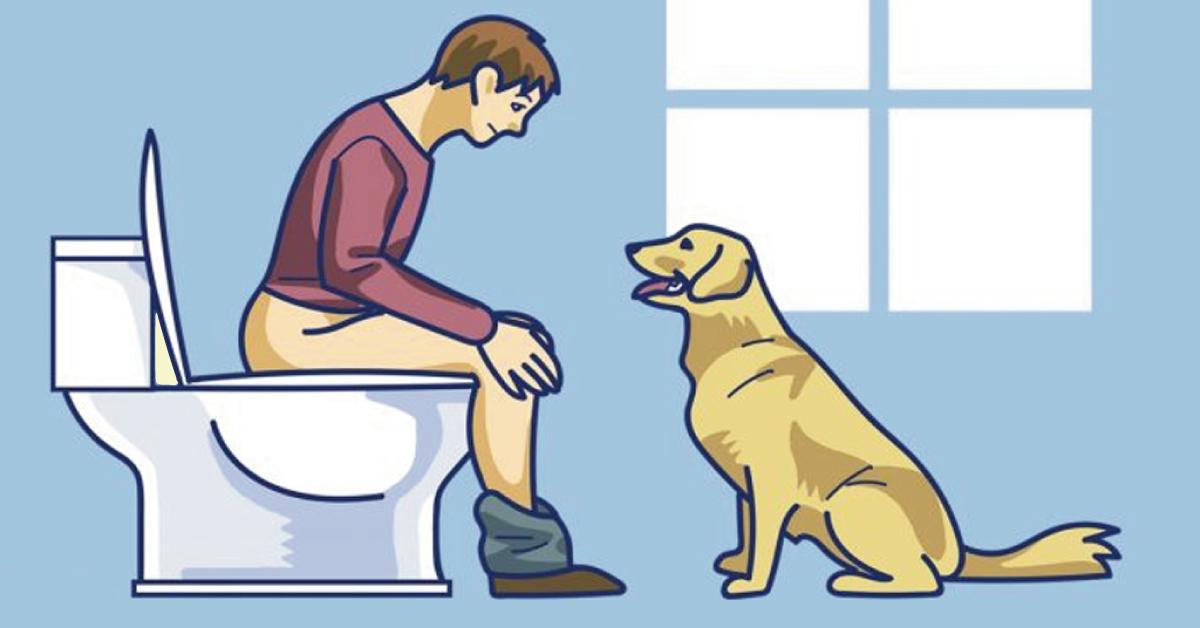 ¿tu perro te sigue a todos lados? con estas señales sabrás lo que quieren d..