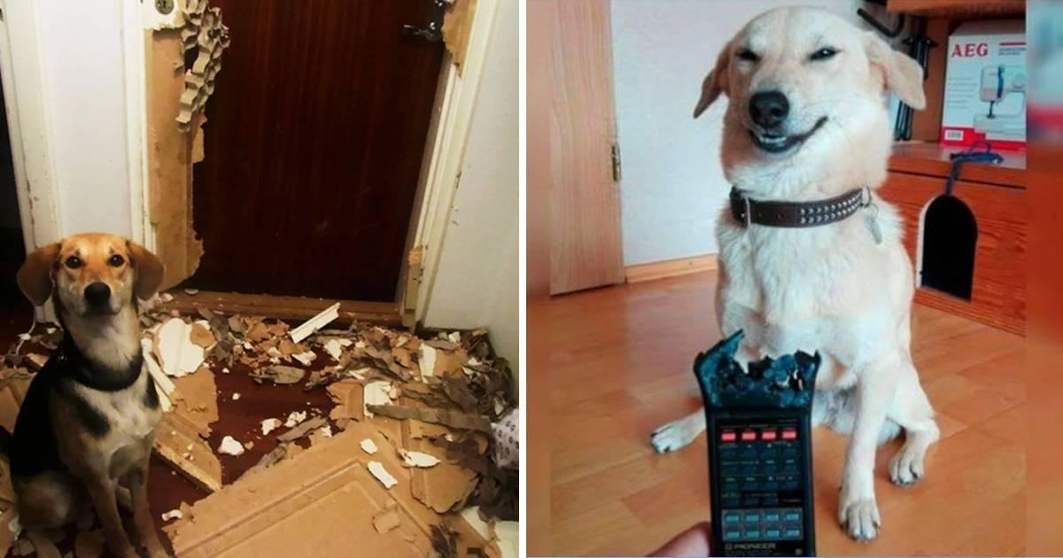 25+ fotografías que muestran que dejar a tu perro solo en casa es una mala idea