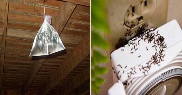 5 simples trucos para no tener insectos en tu hogar