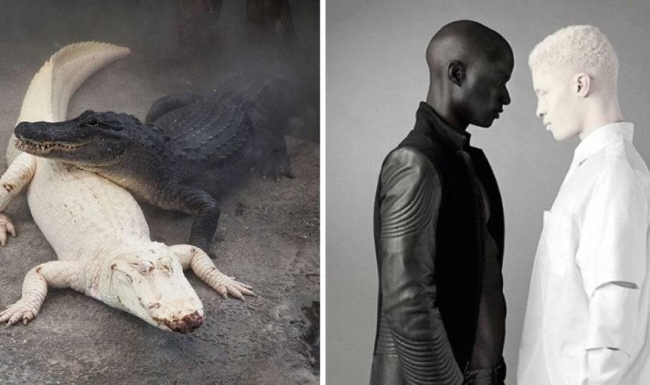 Estas impresionantes fotografías son perfectas y tienen efectos asombrosos,