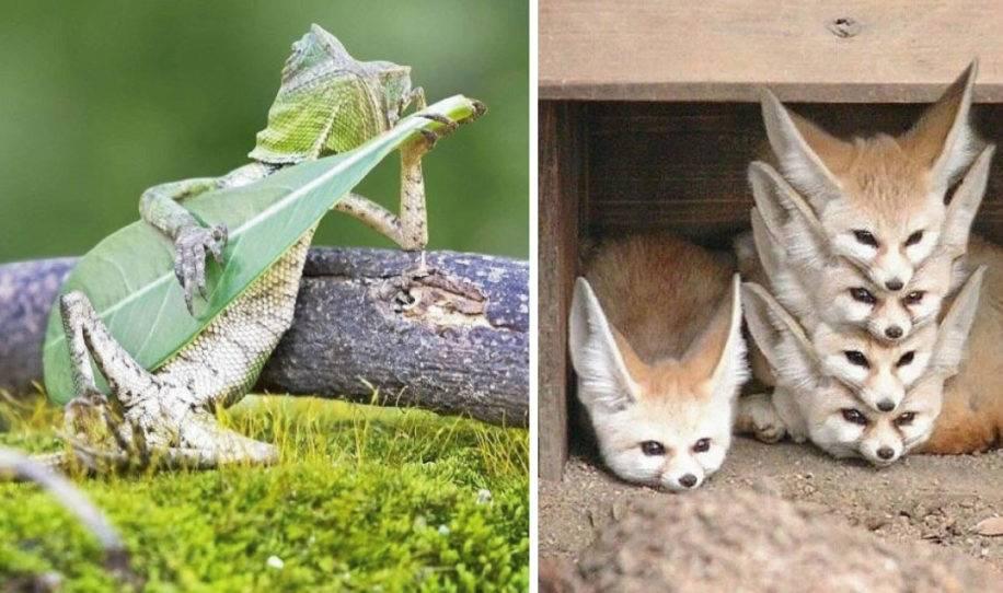 14+ fotos que capturaron el lado más tierno de estos animales