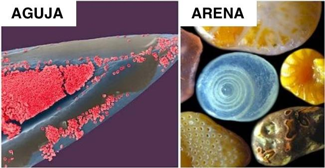 16+ fotos de cosas vistas con un microscopio - parecen de otro planeta