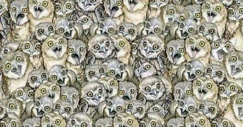¿Puedes encontrar al gato en esta imagen? El reto que pondrá a prueba tu agudeza visual