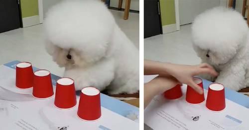 Este es el perro más listo y famoso de internet, deja a todos boquiabiertos