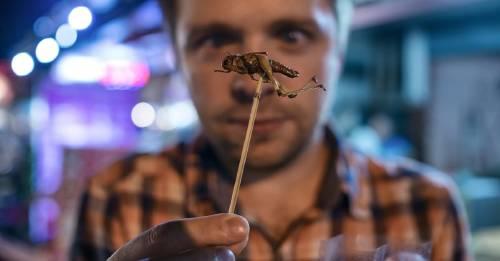 ¿Cuántos insectos nos comemos sin saberlo?