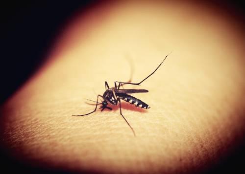Se ha puesto en marcha un plan para erradicar a los mosquitos de la Tierra