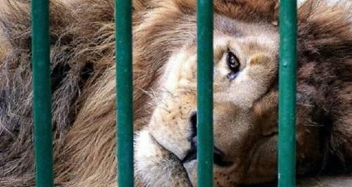 Mira su alegría al ser liberado de un circo luego de vivir durante 13 años e..
