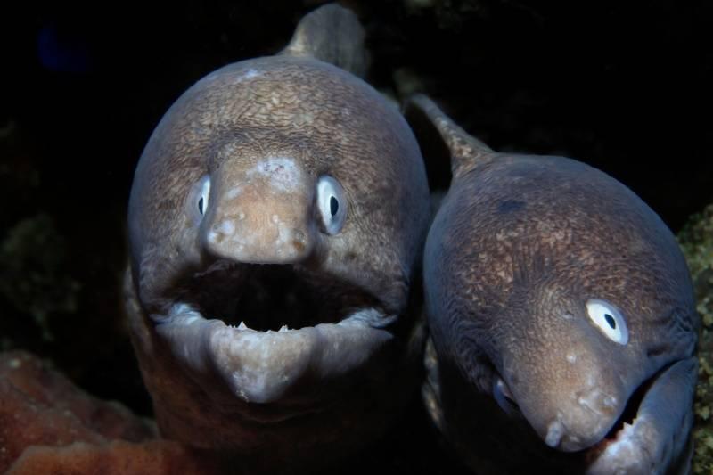 ¡Sorprendente! En Londres se consume tanta cocaína que las anguilas del Támesis están alborotadas