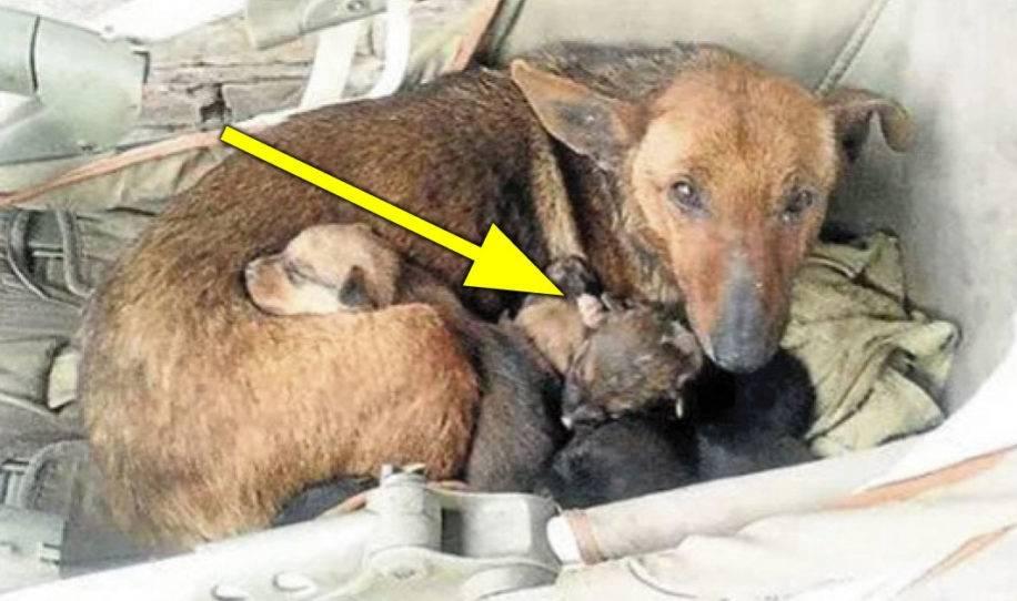 Encuentran a perra callejera con 6 cachorros - ven de cerca y sale una mano en..