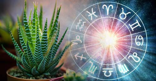 Qué planta debe usar cada signo para limpiar las energías negativas