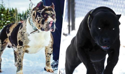 12 razas de perros más temibles por su aspecto