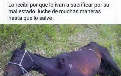 Iban a sacrificar a este caballo por su mal estado pero este hombre se hizo ca..
