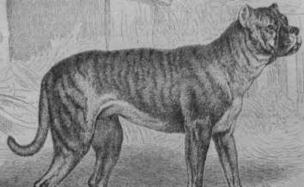 Razas de perros que se extinguieron.