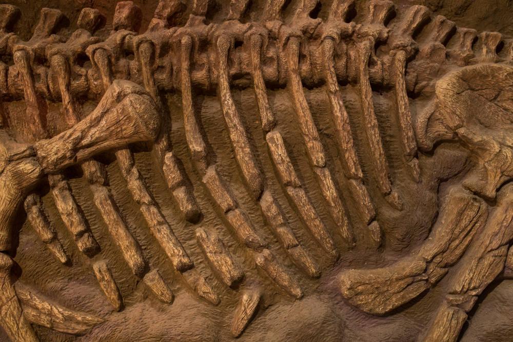 ¡Increíble! Encuentran un dinosaurio emplumado en China