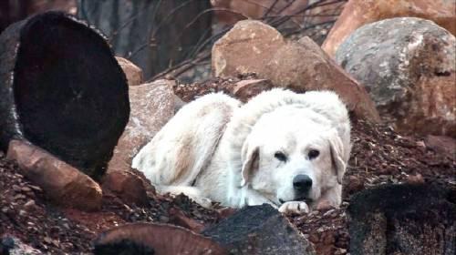 Daban a su perro por perdido en el fuego... ¡pero lo que pasó fue milagroso!