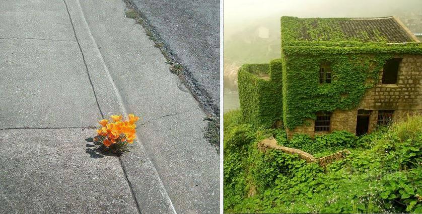 12 fotos de la naturaleza recuperando su espacio