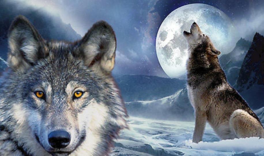 Esta es la historia de los dos lobos, a pesar de que no tardarás mucho en lee..