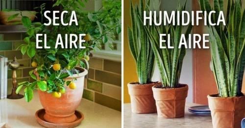 10 plantas para tener un microclima perfecto en el hogar
