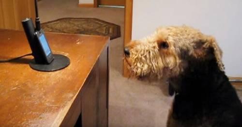Este perrito extraña mucho a su dueña y por eso la llama, le habla y hasta l..